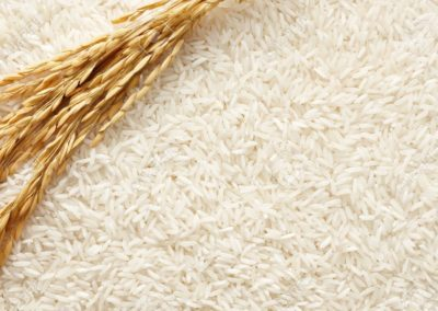 16684798-rice-plant-on-white-rice-as-background